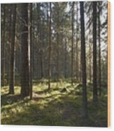 Seitseminen National Park Wood Print