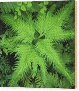 Selaginella Sp. Wood Print