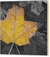 Selective Color Leaf Wood Print