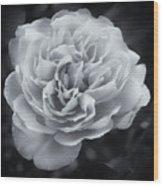 Selenium White Rose Wood Print