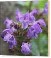 Selfheal Up Close Wood Print
