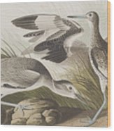 Semipalmated Snipe Or Willet Wood Print