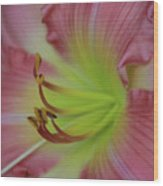 Sensual Pink Lilly Wood Print