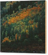 Sentinels Of September Serenity Wood Print