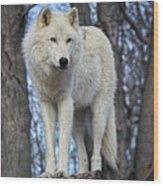 Sentry Wolf Wood Print
