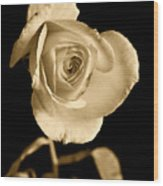 Sepia Antique Rose Wood Print by M K  Miller