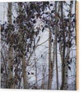 Sepia Aspens Wood Print