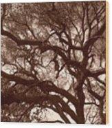 Sepia Branch Burst Wood Print