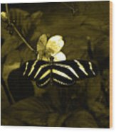 Sepia Butterfly And Flower Wood Print