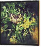 Sepia Butterfly Wood Print