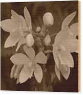 Sepia Flower Wood Print