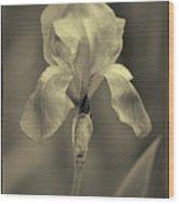 Sepia Iris  Wood Print