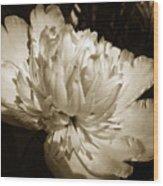 Sepia Peony Flower Art Wood Print