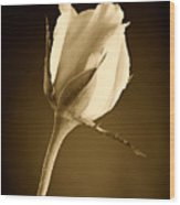 Sepia Rose Bud Wood Print