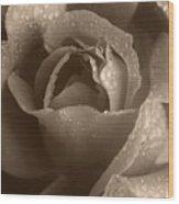 Sepia Rose Wood Print
