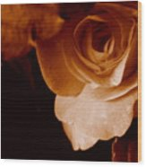 Sepia Series - Rose Petals Wood Print
