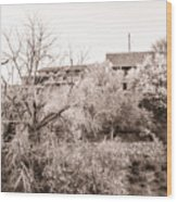 Sepia-toned Blooming Almond Trees Of Fikardou Village 1 Wood Print