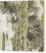 Sepia Toned Pen And Ink Palm Trees Wood Print
