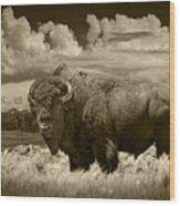 Sepia Toned Photograph Of An American Buffalo Wood Print