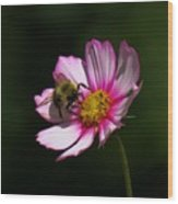 September Bee On Cosmos Wood Print