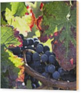 September Grapes - Square Wood Print