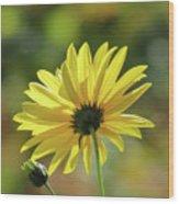 September Sunny Daisy Wood Print