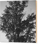 September Tree ... Wood Print