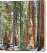 Sequoia Forest Wood Print