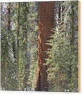 Sequoia General Sherman Wood Print
