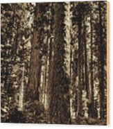Sequoia Grove Along Crescent Meadow Loop Wood Print