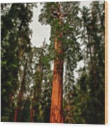 Sequoia In Kings Canyon Wood Print