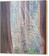 Sequoia Wood Print