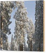 Sequoia National Park 4 Wood Print