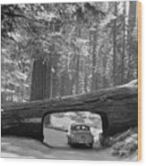 Sequoia National Park Wood Print