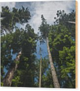 Sequoia Park Redwoods Reaching To The Sky Wood Print