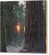 Sequoia Sunset Wood Print