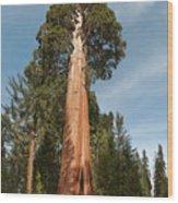 Sequoia Trees Wood Print
