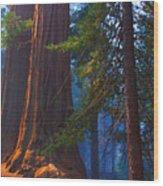 Sequoias On Blue Wood Print