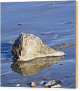Serene Conch Shell At Isle Of Palms Wood Print