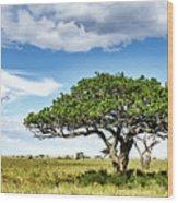 Serengeti Acacia Wood Print