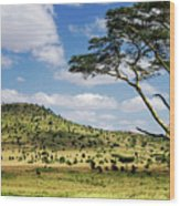 Serengeti Classic Wood Print