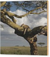 Serengeti Dreams Wood Print