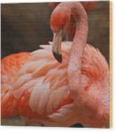 Serious Flamingo Wood Print