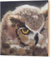 Serious Horned Owl Wood Print