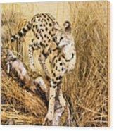 Serval Wood Print