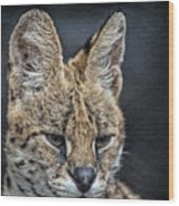 Serval Portrait Wood Print