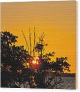 Setting Mangrove Sun Wood Print
