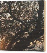 Setting Sun In Tree Wood Print