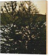 Setting Sun Through A Cypress Tree Wood Print