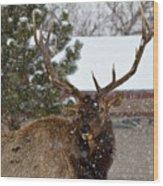 Seven Point Bull Elk Wood Print